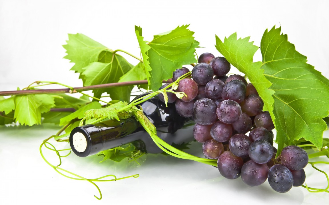 proizvodnja vina srbija