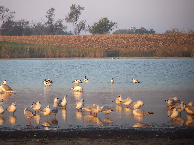 jezera reke srbija